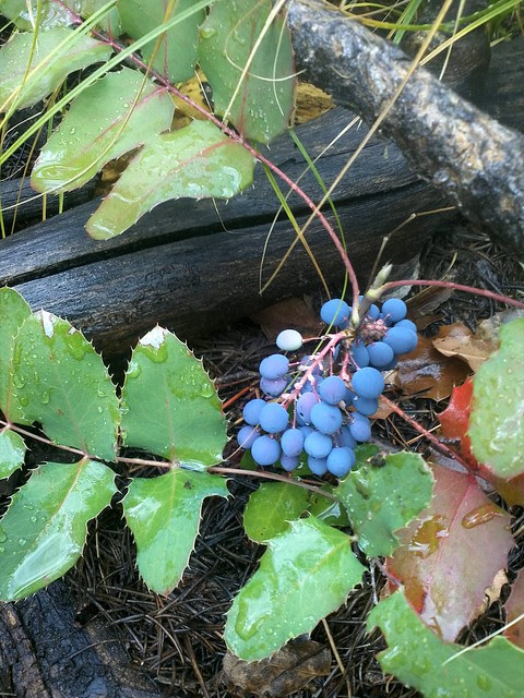 Blue berries, not blueberries.
