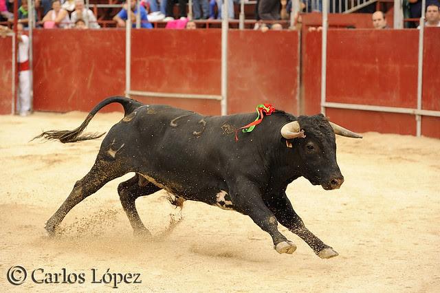 San Miguel 031