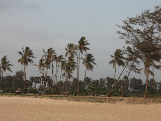 Coconut trees near Panambur beach, Mangalore