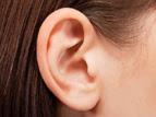 वैज्ञानिकों ने पशु ऊतक से बनाया कृत्रिम मानव कान