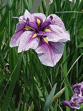 366日誕生花の辞典5月の誕生花 誕生花の図鑑