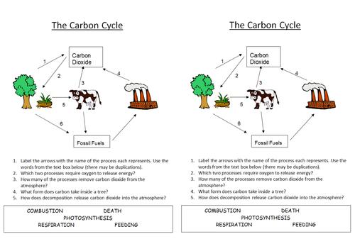 29 Carbon Cycle Worksheet Answers - Ekerekizul