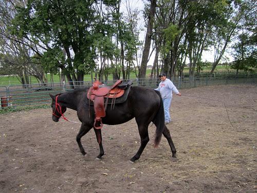 training_saddlelunge2