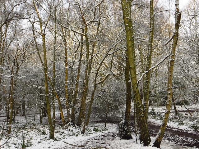 Hampstead Heath in the Snow