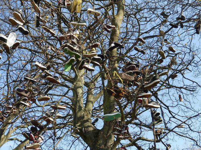 The Shoe Tree, Saughton Skatepark