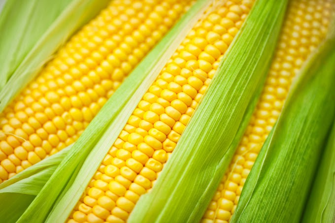 You Should See This If You're A Corn Lover