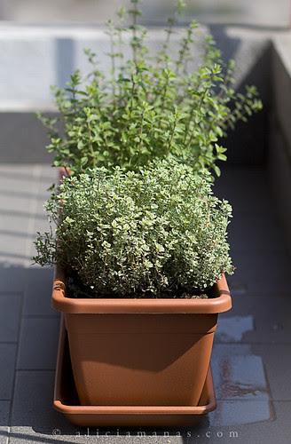 """Le erbe del mio """"giardino"""""""