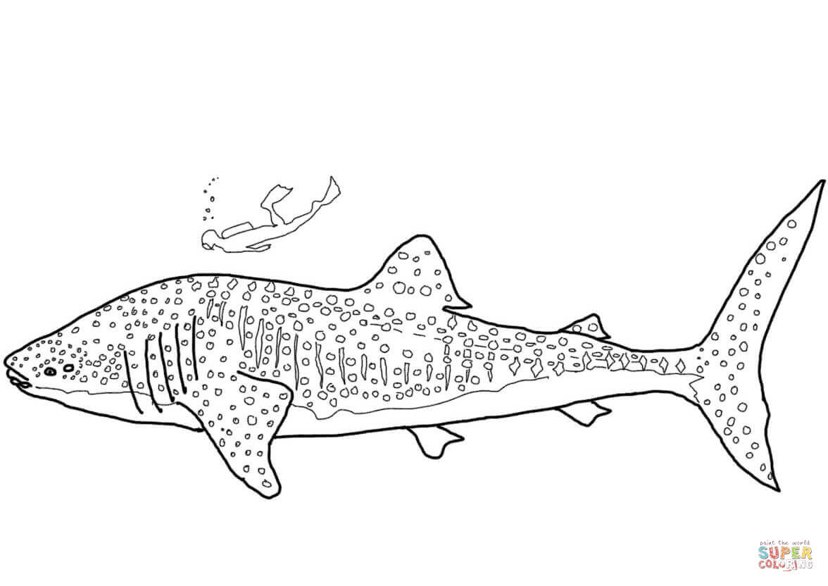 Whale Shark coloring page | Free Printable Coloring Pages