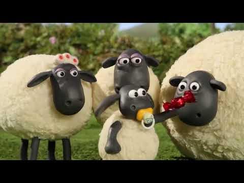 كرتون شون ذا شيب shaun the sheep - عائلة زين