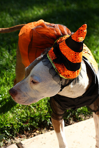 The Orange Witch