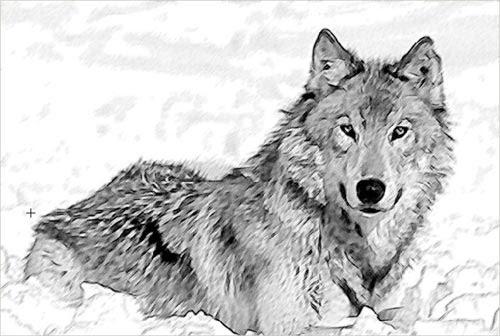 Creando La Acuarela De Un Lobo Con Akvis Sketch