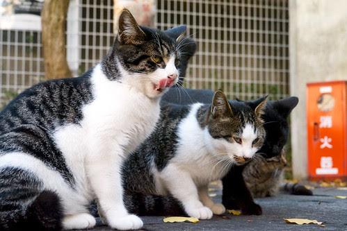 染井散歩-猫