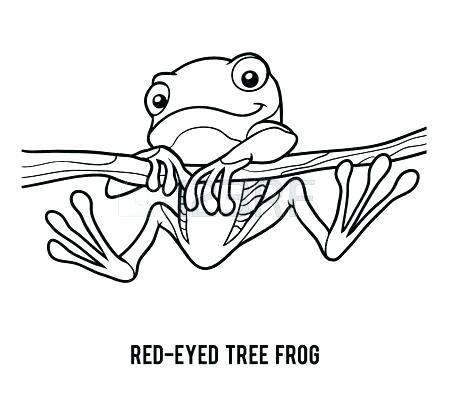 red eye tree frog coloring pages at getdrawings  free