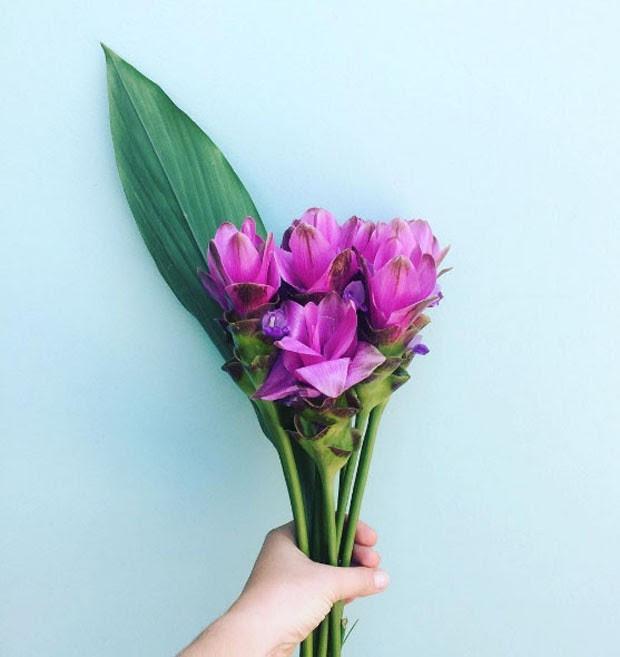 Resultado de imagem para flores de fevereiro