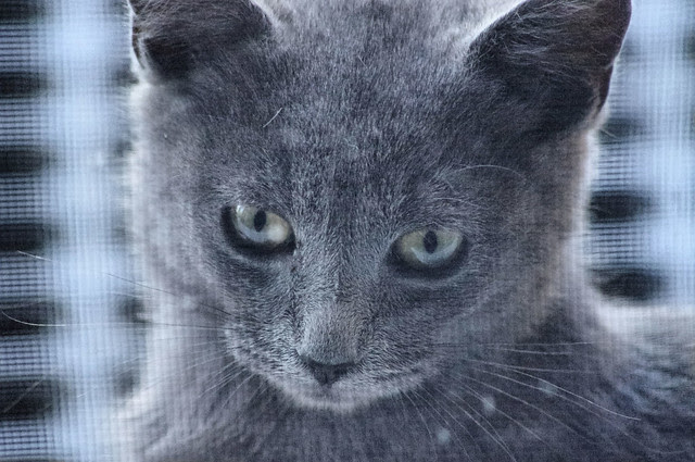 2012_09_30_2012 cats 013
