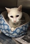 """Tras 20 años junto a su gato deciden abandonarlo porque """"está viejo y sordo"""""""