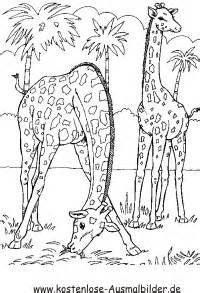 Ausmalbilder Jungle Tiere Kostenlose Malvorlagen Ideen