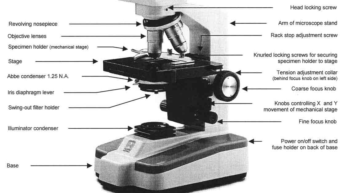 32 Parts Of A Compound Light Microscope Worksheet ...