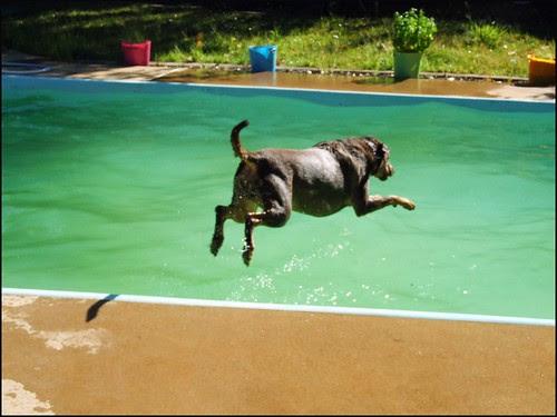 Emerald Dog Dive.