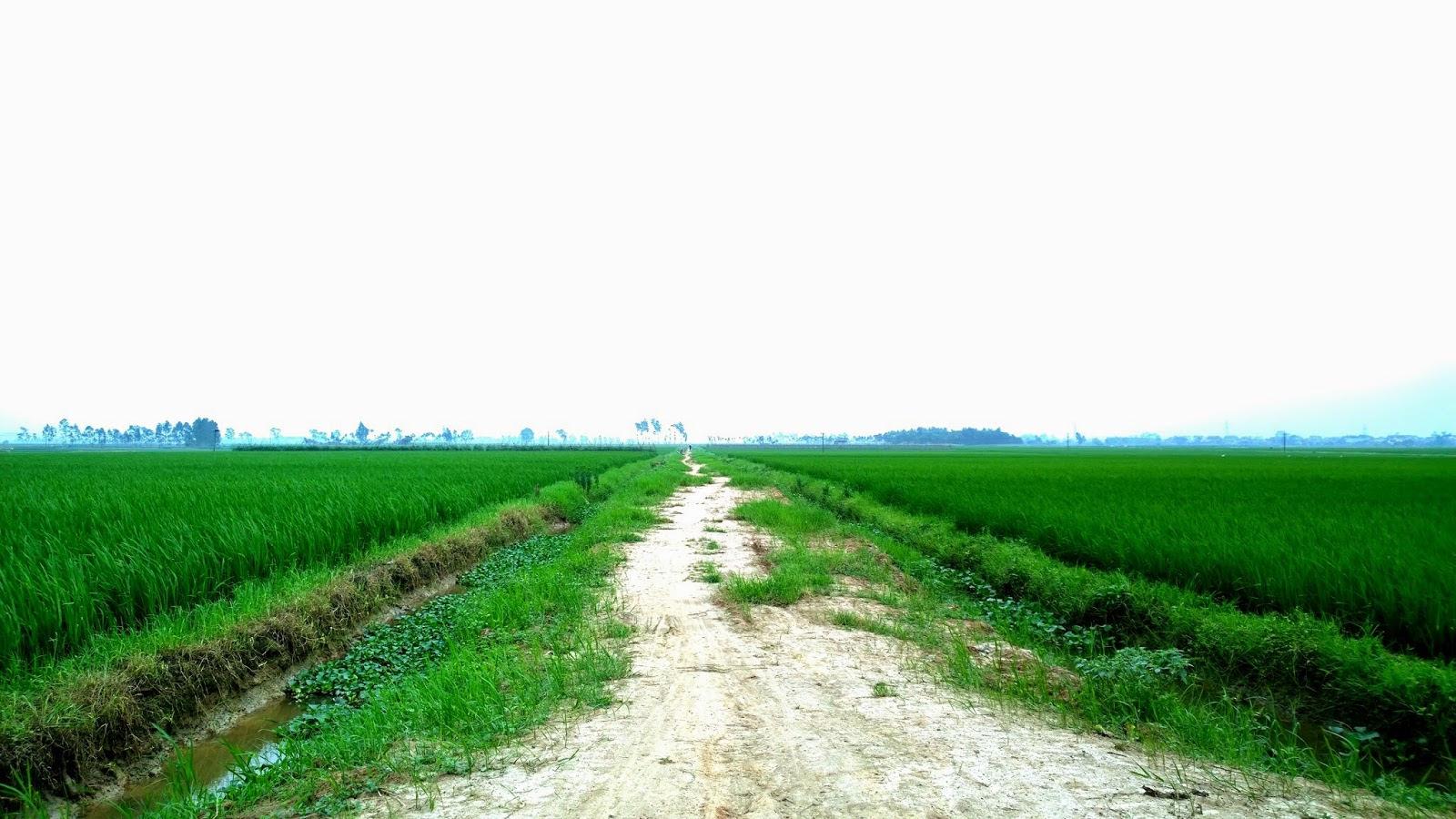 đường đi tới đồi 79 mùa xuân