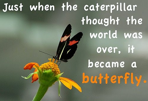Just When The Caterpillar Thought The World Was Over Quote Picture
