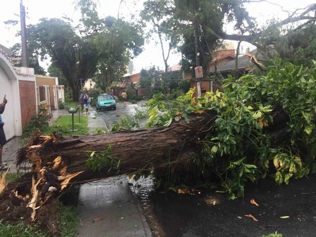 Vento forte derrubou árvore no bairro Esplanada em São José (Foto: Ronaldo Poli/ Vanguarda Repórter)