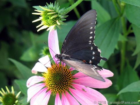 Attracting Pollinators 4