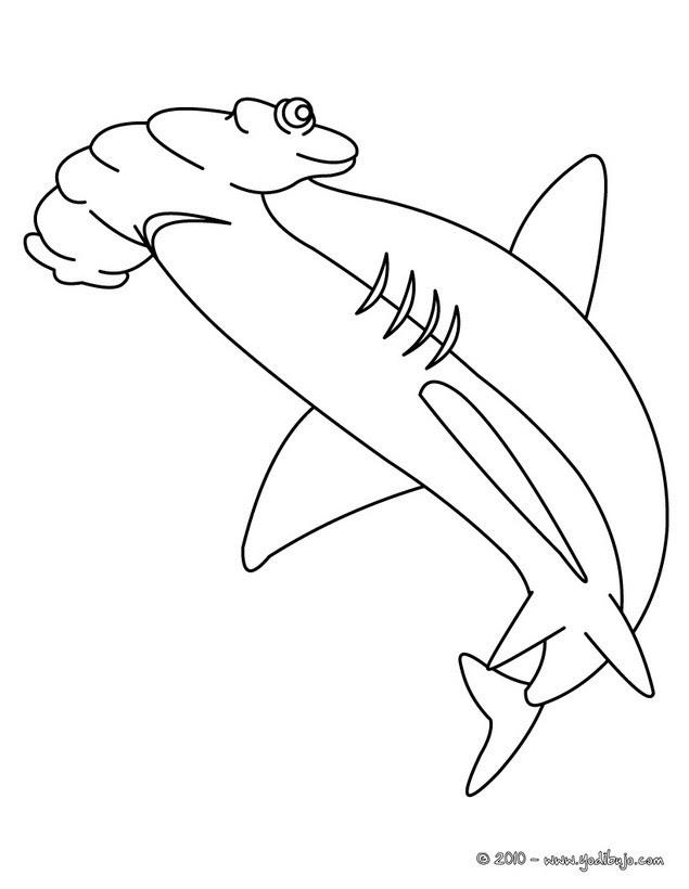 Dibujos Para Colorear Tiburon Martillo Eshellokidscom