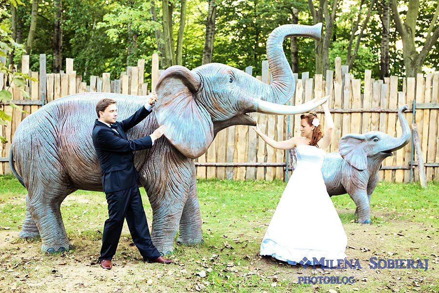 Zdjecie slubne ze sloniem