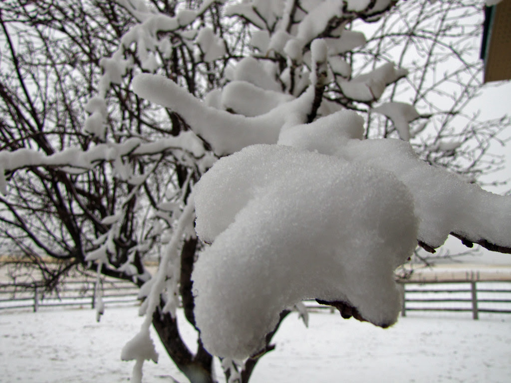 Snow on the Apple Tree