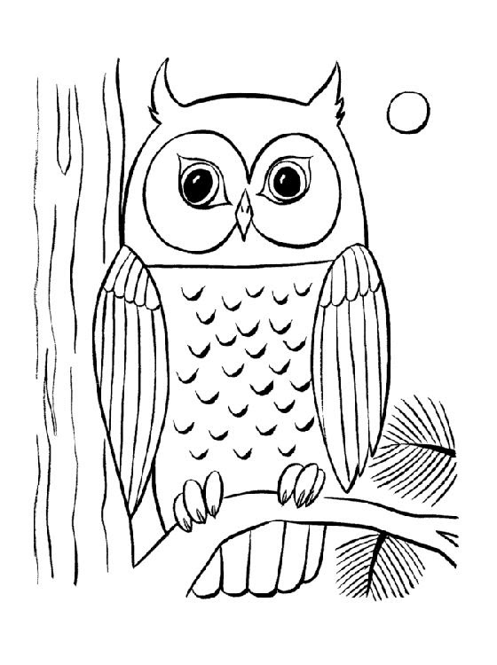 1000+ ideas about Owl Coloring Pages on Pinterest | Colouring ...
