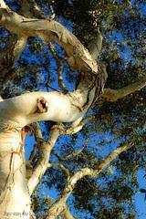 Soft Tree