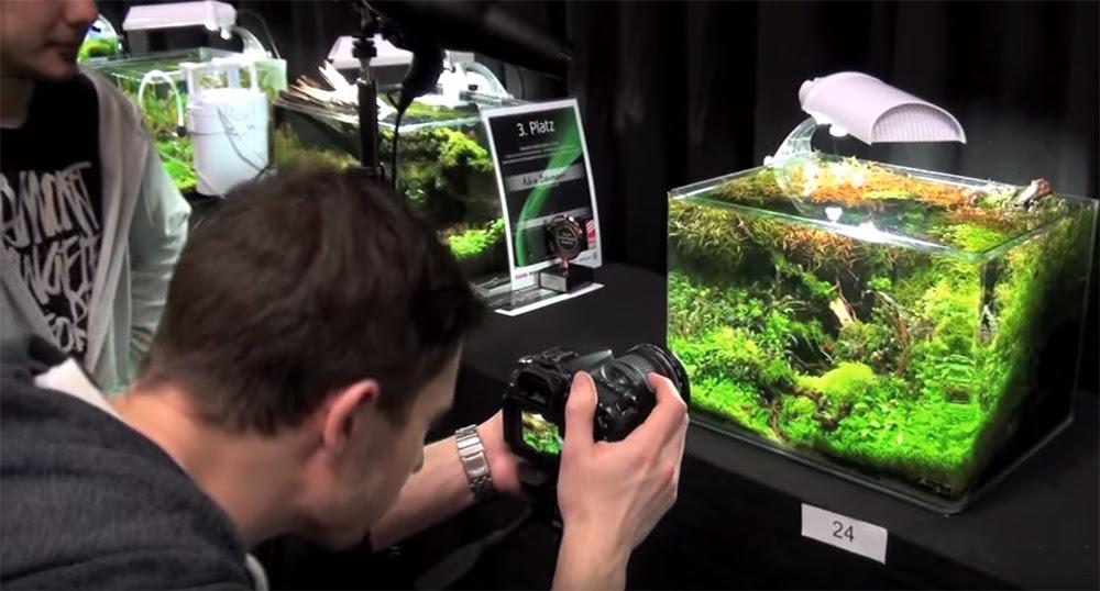 Aquascape Videos Aquascape Ideas