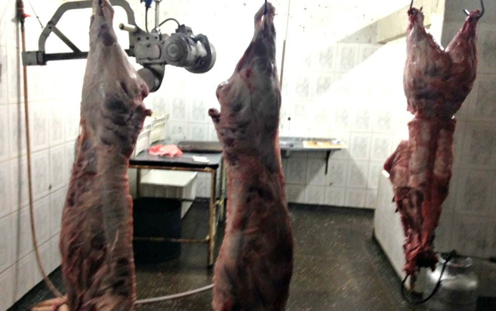 Quatro animais morreram durante o transporte (Foto: Secretaria de Agricultura de Juína-MT/ Assessoria)