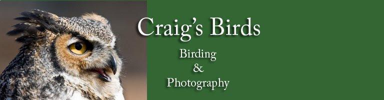 Craig's Birds