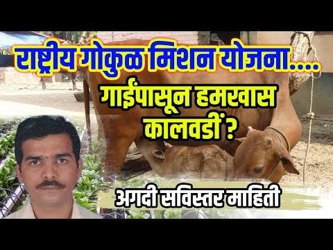 Rashtriy Gokul Mishan Yojana गाय दुग्ध पशु पालक शेतकरी बांधवानो राष्ट्रीय गोकुळ मिशन योजना काय आहे?
