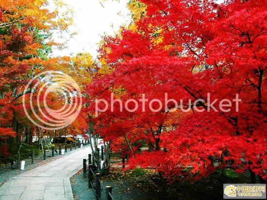 Image Source,Photobucket Uploader Firefox Extension