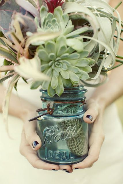 More succulents...pair with driftwood, something orange= centerpieces!?