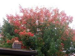 Foliage_9310