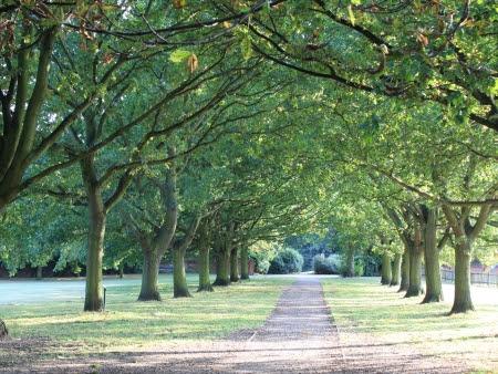Resultado de imagem para árvores