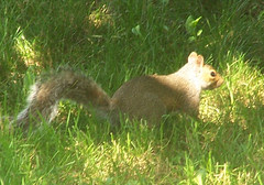 Squirrel_709b