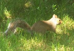 Squirrel_709b