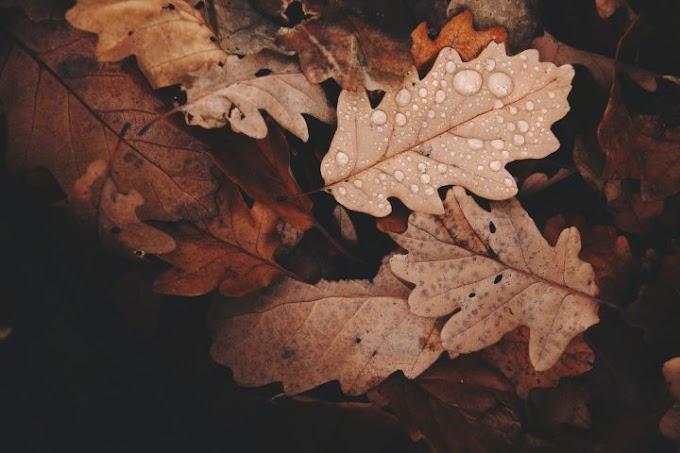 Метеоролог предупредил о«глубокой холодной яме» наэтой неделе