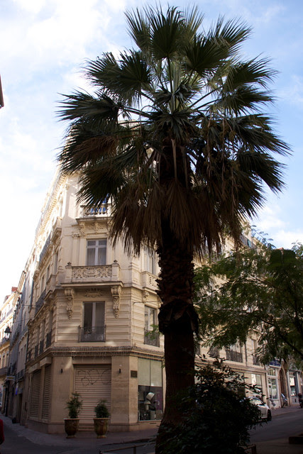 Montpellier 26