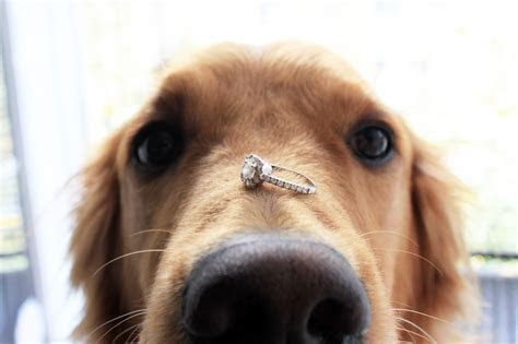 CUTENESS ALERT! Pet Proposals to Make Sure They?ll Say