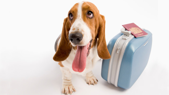 Considering Pets in Vacation Rentals - Part 2 - Yes, Fido ...