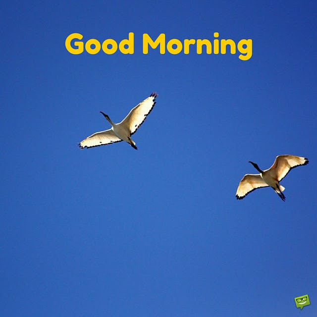 Group Of Good Morning Birds Flying