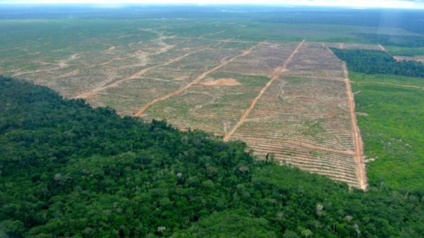 Deforestación en Ucayali.
