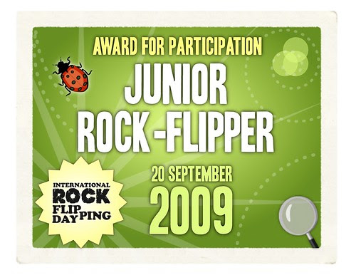 Junior Rock-Flipper Award