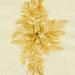 sea weed by t. van gieson